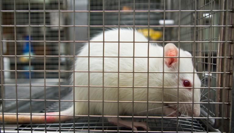 Un anno dopo la Legge sulla sperimentazione animale, ancora da emanare 9 fra decreti e atti