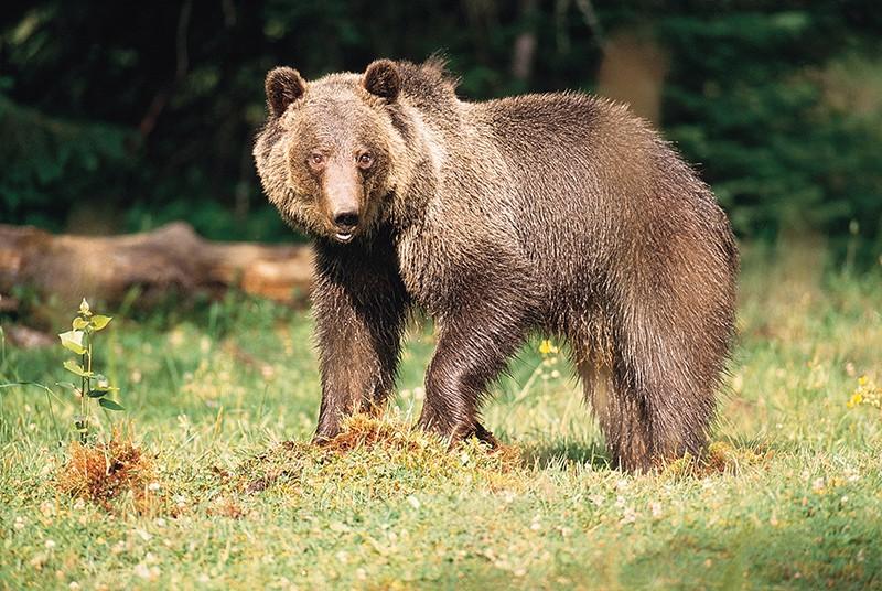 Non si fermino le indagini per l'orso marsicano ucciso a settembre