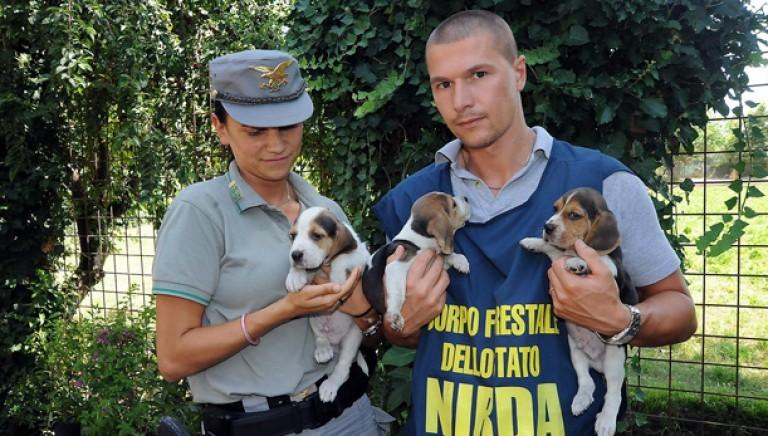 Reati contro gli animali. Renzi e Orlando come è andata a finire?