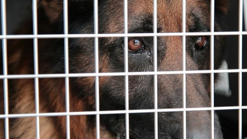 Zagor, l'ultimo cane ad uscire dal canile Parrelli