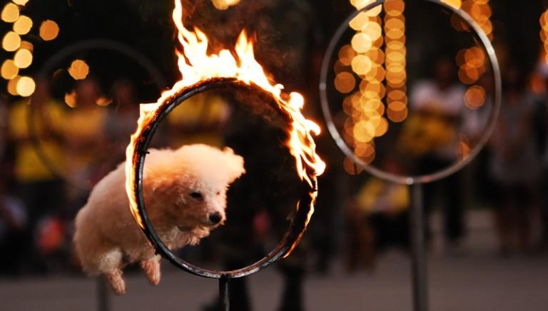 27 Paesi al mondo hanno detto NO agli animali nei circhi. E l'Italia cosa aspetta?