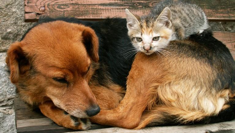 Lettera all'Ambasciatore Spagnolo per dire basta ai maltrattamenti degli animali nel loro Paese