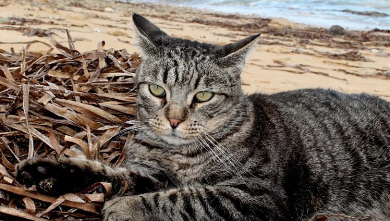 Vittoria: i gatti di Su Pallosu non saranno trasferiti