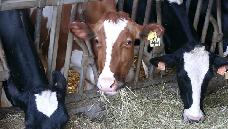 Controlli bluff nelle stalle: indagato direttore veterinario Asp Palermo