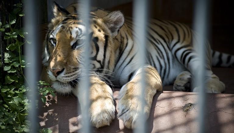 Zoo di Napoli, riconversione unica alternativa. Manifestazione il 19 aprile