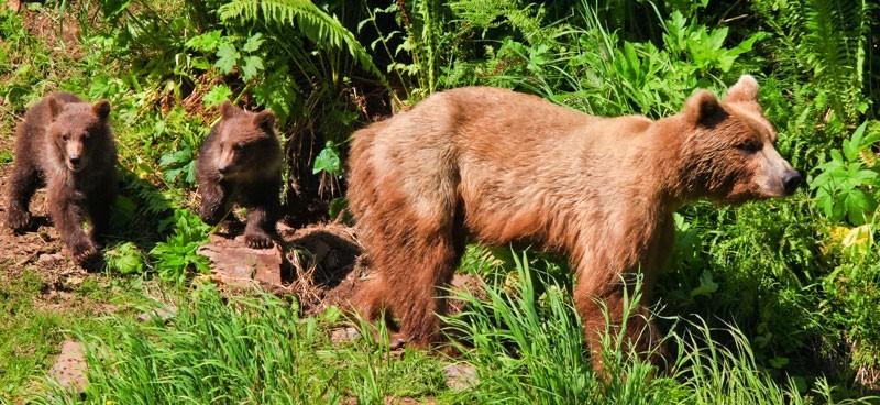 L'orsa con i suoi cuccioli