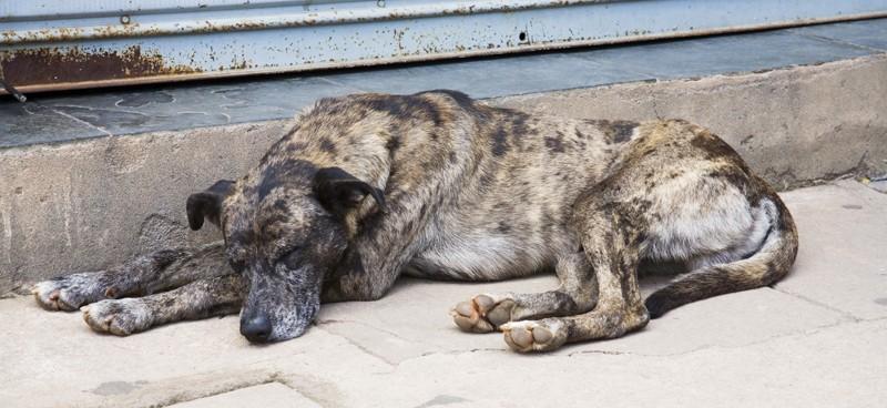 Senato oggi vota contro maltrattamenti animali. Rispettiamo impegni europei!