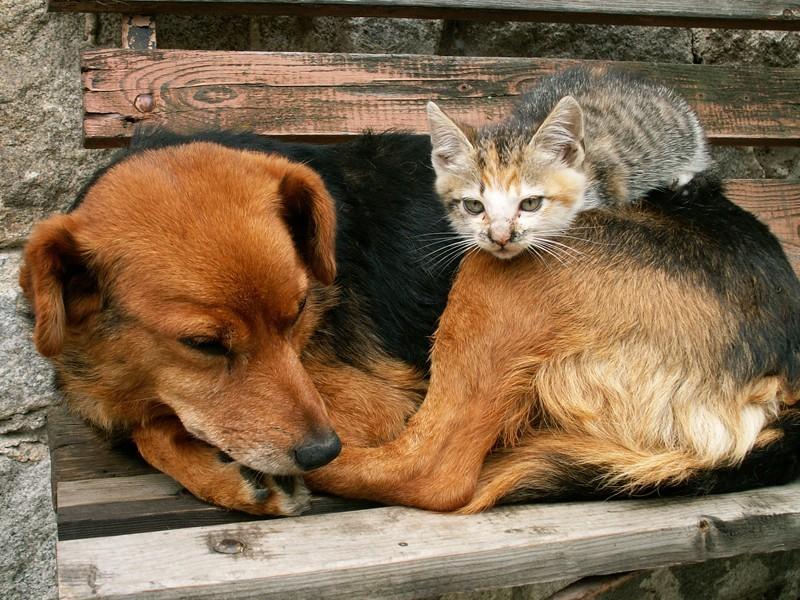 Il Senato approva la mozione contro i maltrattamenti degli animali.