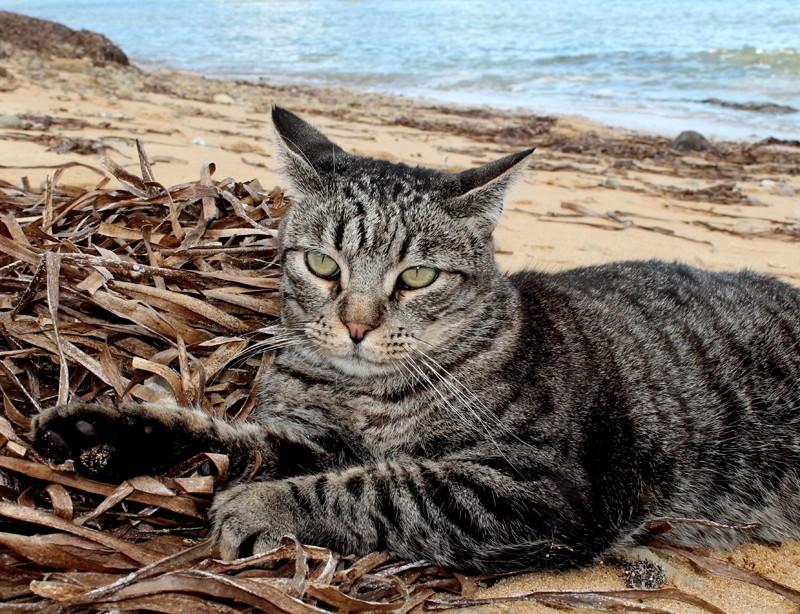 """Su Pallosu, no a  piano gestione: colonie feline """"deportate"""" e gatti """"ai domiciliari"""""""