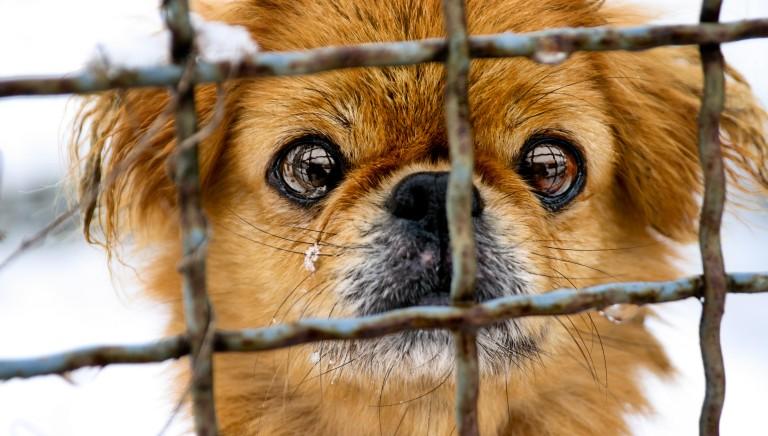 Lettera all'Ambasciatore cinese: fermare festival della carne di cane