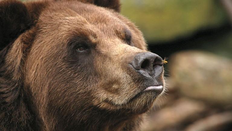 #maipiudaniza Provincia di Trento informi su corretta convivenza con orsi