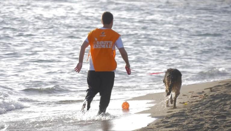 La prima volta al mare per i cani salvati dal canile Parrelli