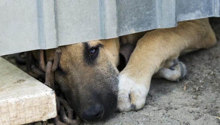 Ussita (Mc), pastore condannato per la morte di cinque cuccioli di cane