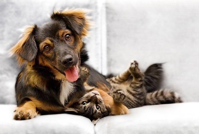 Vivere con un animale domestico fa risparmiare 4 mld di spesa sanitaria!