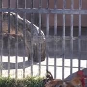 Animali detenuti all'Odry Zoo a Cagliari