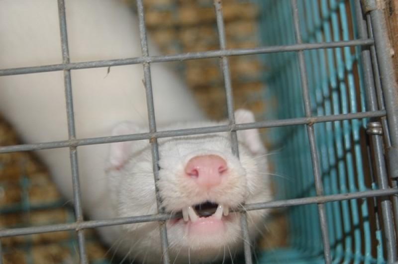 Anche San Paolo del Brasile vieta il commercio di pellicce. E noi?
