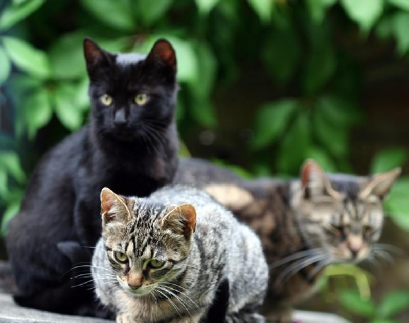 In Australia si annuncia una strage di gatti. La soluzione: sterilizzarli