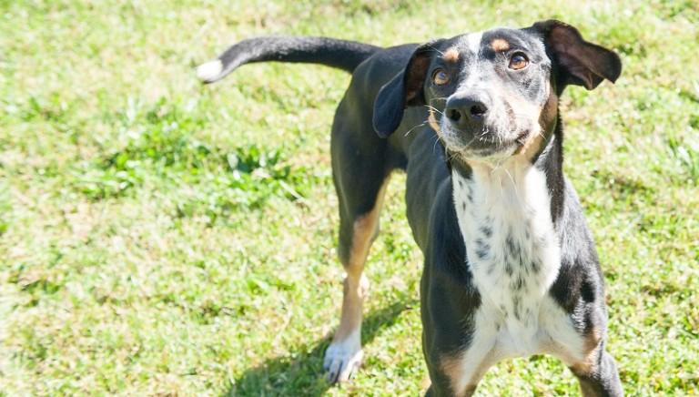 D'estate scegli la solidarietà: adotta un cane del Parrelli