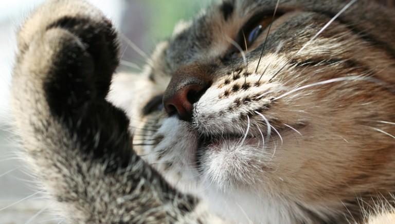 Rocky: un vita stroncata da un pallino da caccia