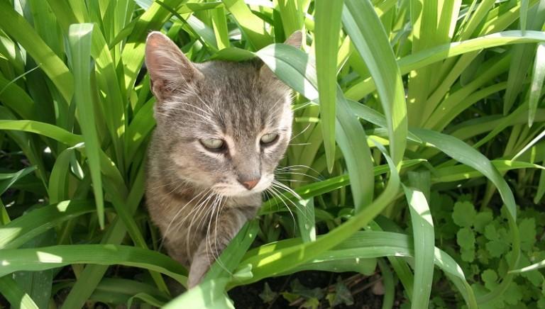 Napoli: gatto ucciso a colpi di pala da ragazzini. Non sottovalutare segnali