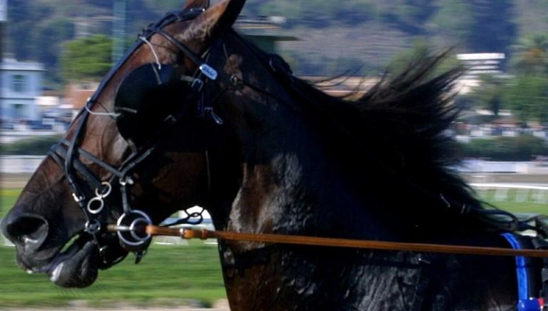Palio di Castel del Piano, due cavalli feriti: abolire la corsa