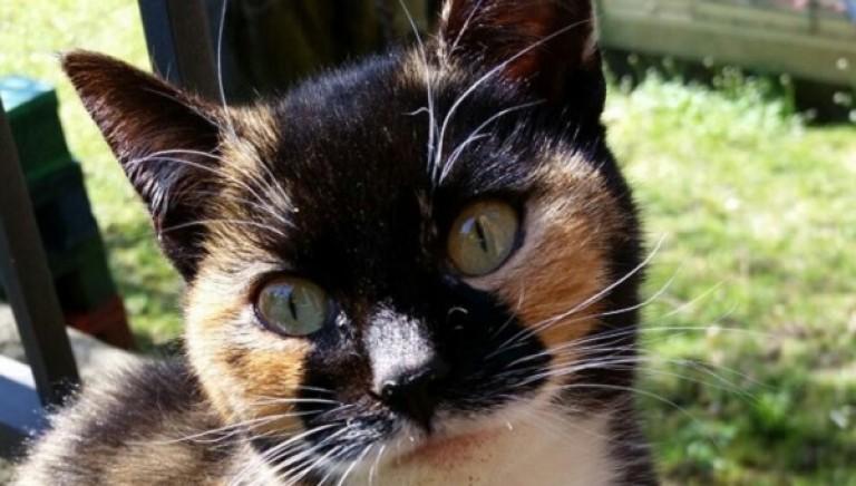 Spara a gatta e la finisce calpestandola: denunciato presunto autore