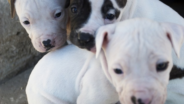 """Protect Our Pets"": sign to stop the illegal trade of pet in Europe"