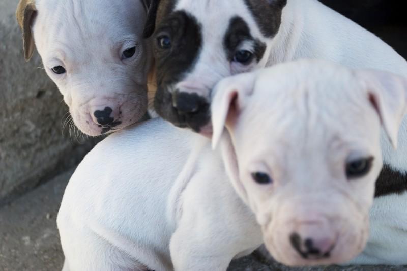 """""""Protect Our Pets"""" firma per bloccare il traffico di cuccioli in Europa"""