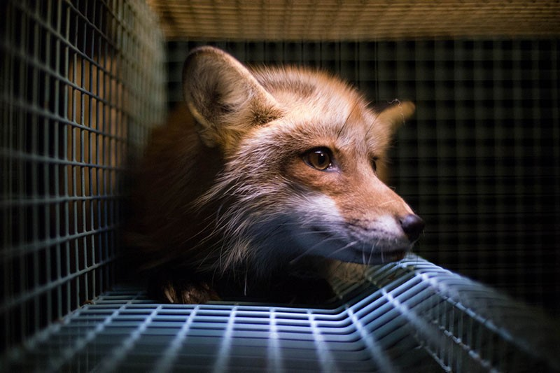 Foto Network for Animal Freedom/Norwegian Animal Protection Society