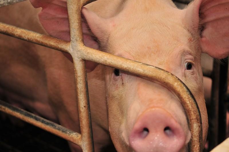 """Carne rossa """"nuoce gravemente alla salute"""". Anche l'OMS lo conferma"""