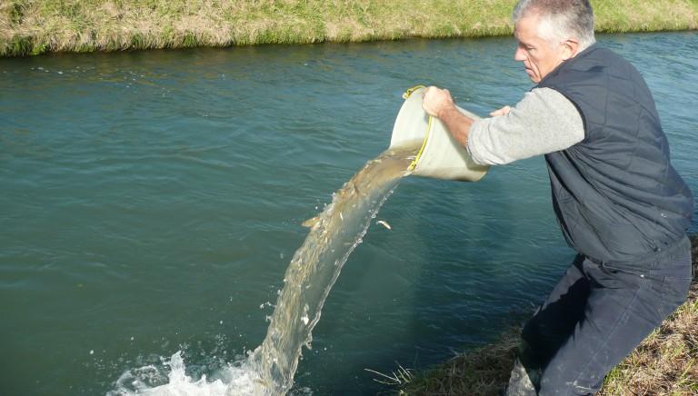 Secchio dopo secchio, volontari salvano in extremis 500 pesci da fiume in secca