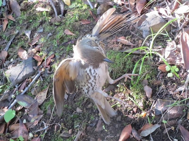 Un uccellino catturato