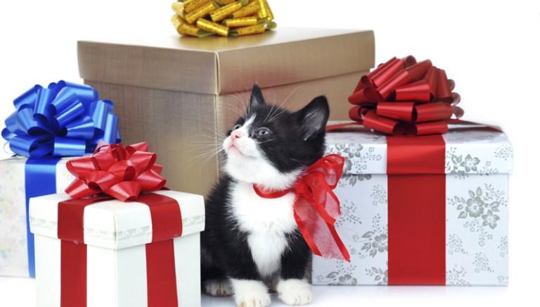 Natale solidale con gli animali. Tante idee regalo della LAV
