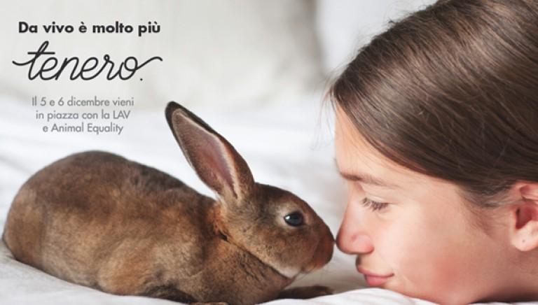 Il 5 e 6 dicembre vieni a firmare per salvare i conigli. #coraggioconiglio