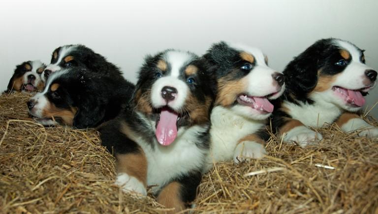 Traffico cuccioli: 3 persone rinviate a giudizio. LAV costituita parte civile