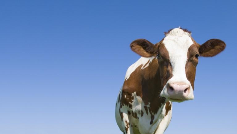 Conferenza Clima: l'industria della carne teme l'accordo di Parigi