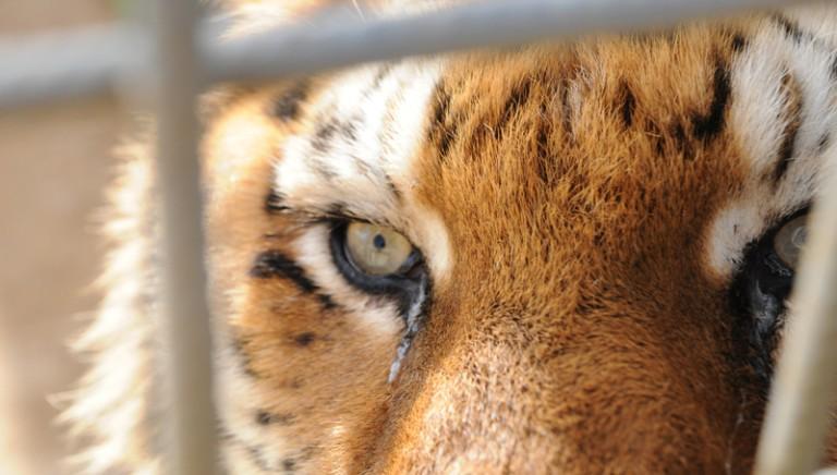 Più risorse per gli animali confiscati dalla Convenzione CITES