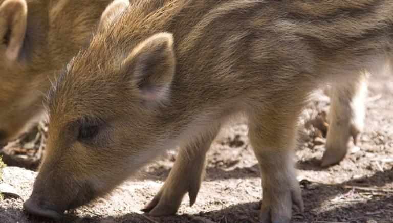 Approvata nuova legge: tutte le novità in materia di caccia e animali selvatici