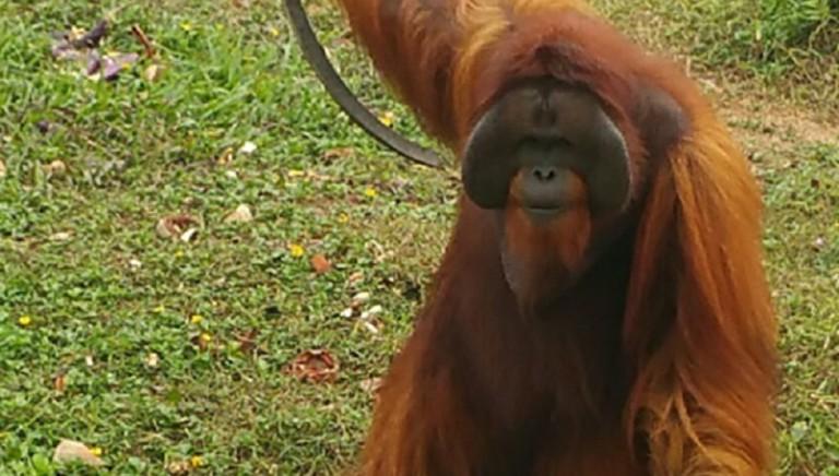 Diario dal Borneo: l'ultimo rifugio degli oranghi
