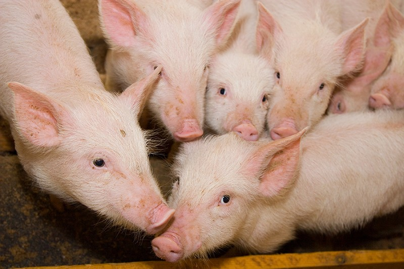 Sopravvivere alle valanghe. Dopo anni di proteste ora test senza animali