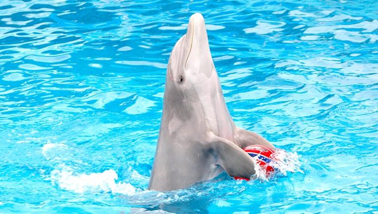 Inizia domani il processo al delfinario di Rimini per maltrattamento di animali