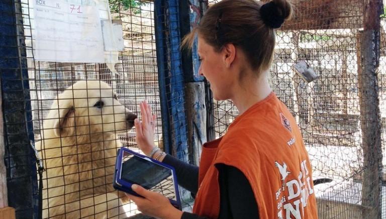 """Domani inizia il processo al """"Rifugio"""" Parrelli per maltrattamento di animali"""