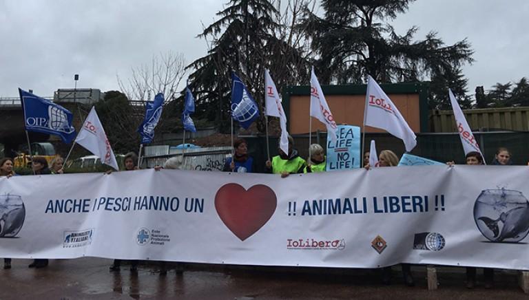Anche i pesci hanno un cuore. Flash Mob contro l'acquario di Roma