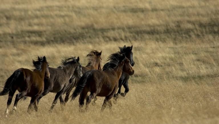 """Salone """"Cavalli a Roma"""". LAV: non esiste equitazione """"sostenibile"""""""