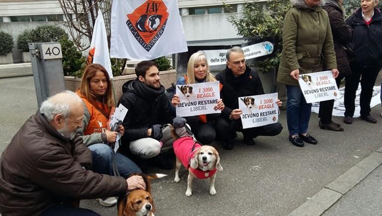 Tutti i beagle salvi: vittoria in appello contro Green Hill