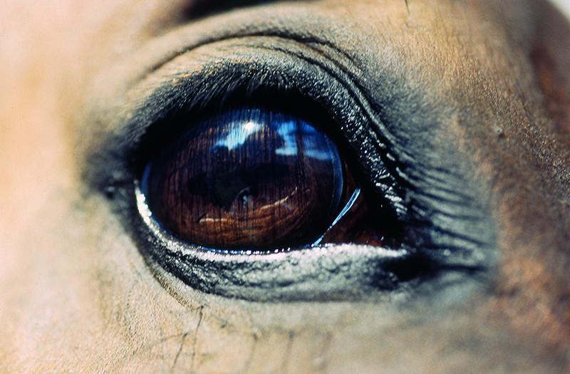 Giostra dell'Orso (Pistoia), abbattuti due cavalli. Vogliamo giustizia!