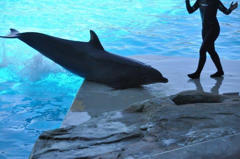 Zoomarine e Oltremare: nostra investigazione su condizione delfini