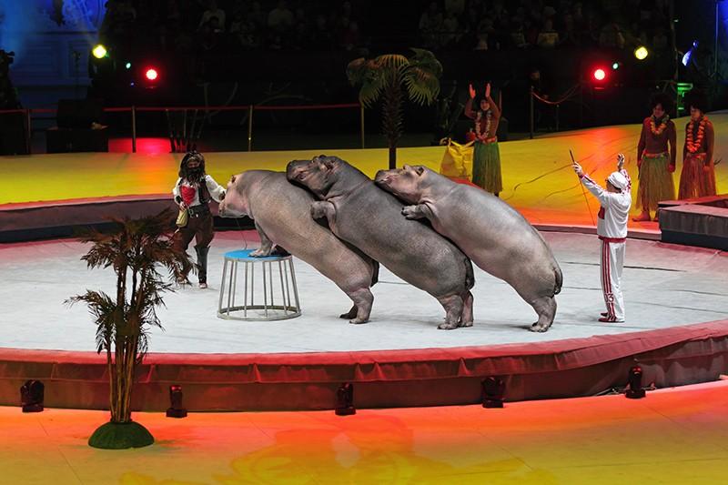 Via gli animali dai circhi: 53 associazioni scrivono al Ministro Franceschini