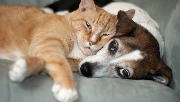 Roma:ordinanza Commissario Tronca non vieta di dare cibo a cani e gatti