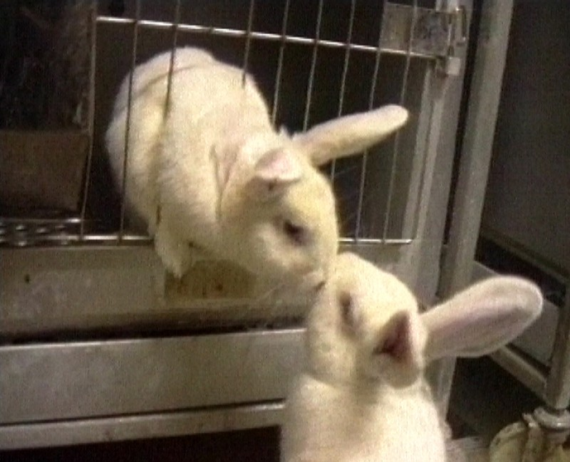 """24 Aprile: Giornata Mondiale animali """"da laboratorio"""". Aiutali a Uscirne!"""